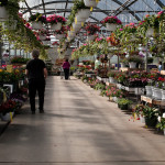 garden center aisle