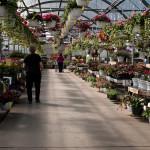 garden center aisle