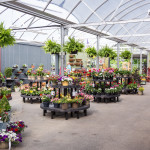 Hanging-Plants-Freys-Greenhouse-Lancaster-PA