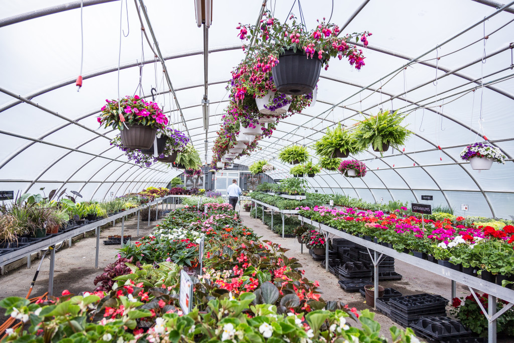 Inside-the-Greenhouse-Lancaster-PA