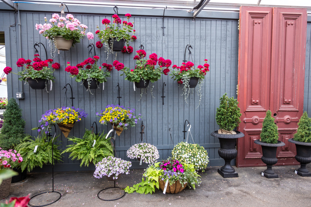 Variety-Potted-Flowers-Freys-Greenhouse-Lancaster-PA